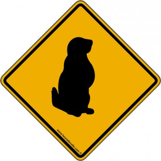 Attention Marmotte